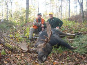 more moose 019